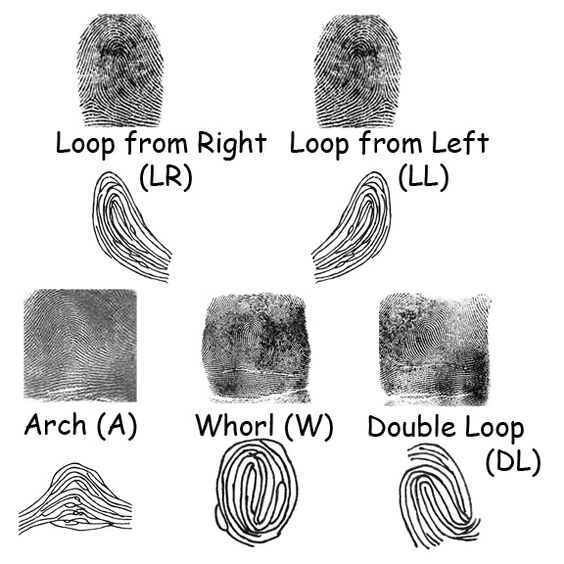 finger print types
